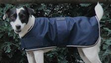 Couvertures et accessoires pour chien