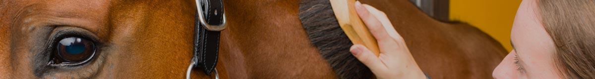 Soins et entretien du cheval