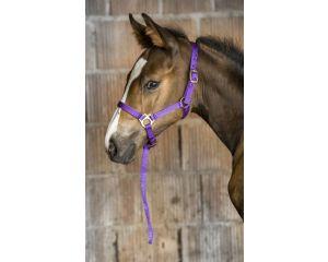 Licol foal + longe NORTON (Violet)